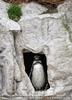 Pinguin Wächter