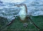 Pinguine 02