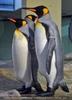 Pinguine 06