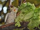 Salat schnaberln