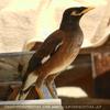 Samui Bird
