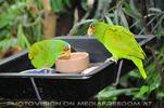 Papageien Futterstelle