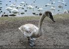 Wasservogel Paradies 15
