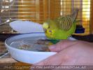 Speedy Bath