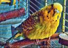 Painted Birdland 1