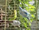Birdland 2