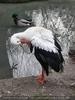 Storch und Ente