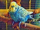 Painted Birdland 2