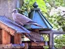 Birdland 4
