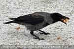 Vögel füttern 05