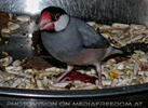 Vogel Futterschüssel