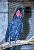 Vogelparadies 10