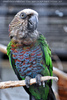 Vogelparadies 13