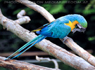 Vogelparadies 14