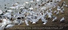 Wasservogel Paradies 05