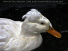 White Duck Vision