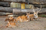 Bambi Familie