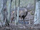 Den Wald schützen 27