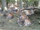 Bambi Nest