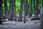Schlosspark 34