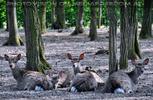 Schlosspark 36