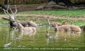 Wild im Teich