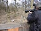 Die Wölfe und der Fotograf