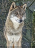 Wolfsrudel - Pix 05